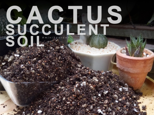 ดินปลูกแคคตัส กระบองเพชร ไม้อวบน้ำ
