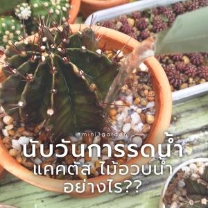 cactus655