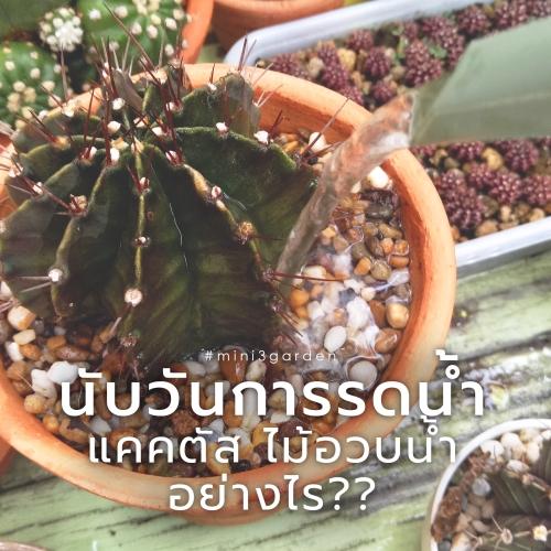 cactus655.jpg