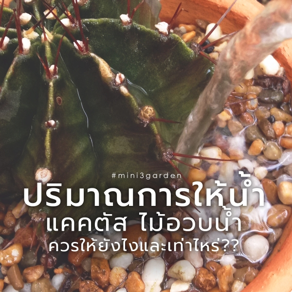 cactus_water