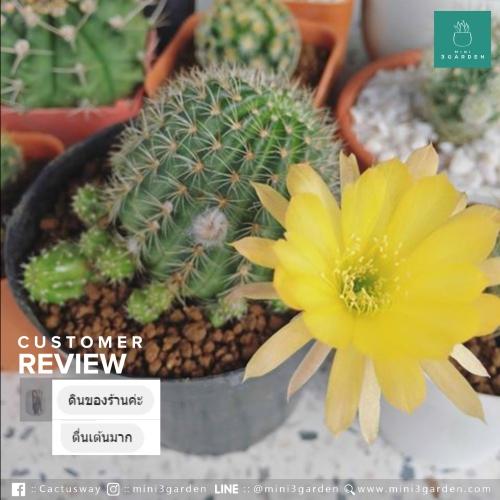 customer review.jpg