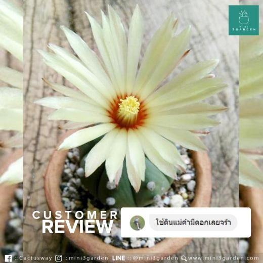 mini3garden_soil_review(1).jpg