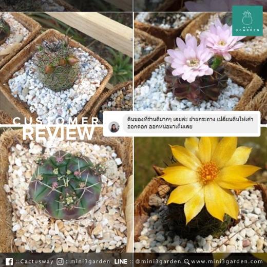 mini3garden_soil_review(2).jpg
