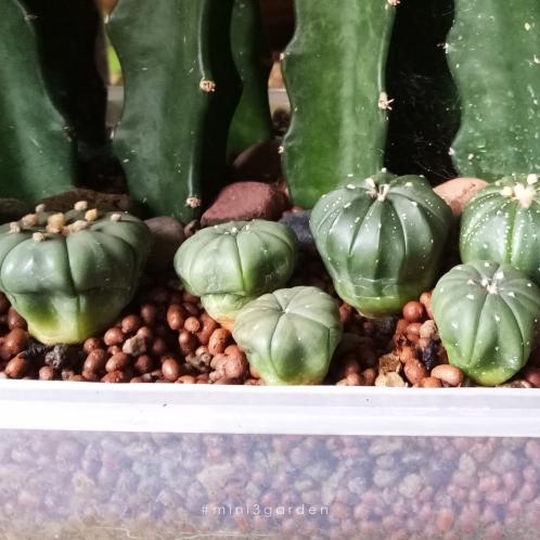 cactus-sick6