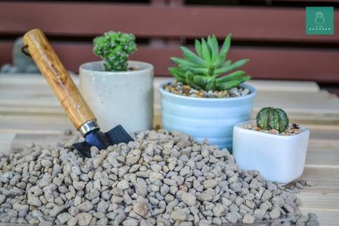 cactus-succulent-4594561