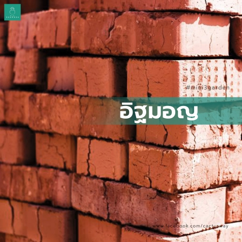 cactus_002_brick