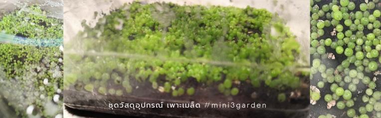 cactus_gymno_seeding
