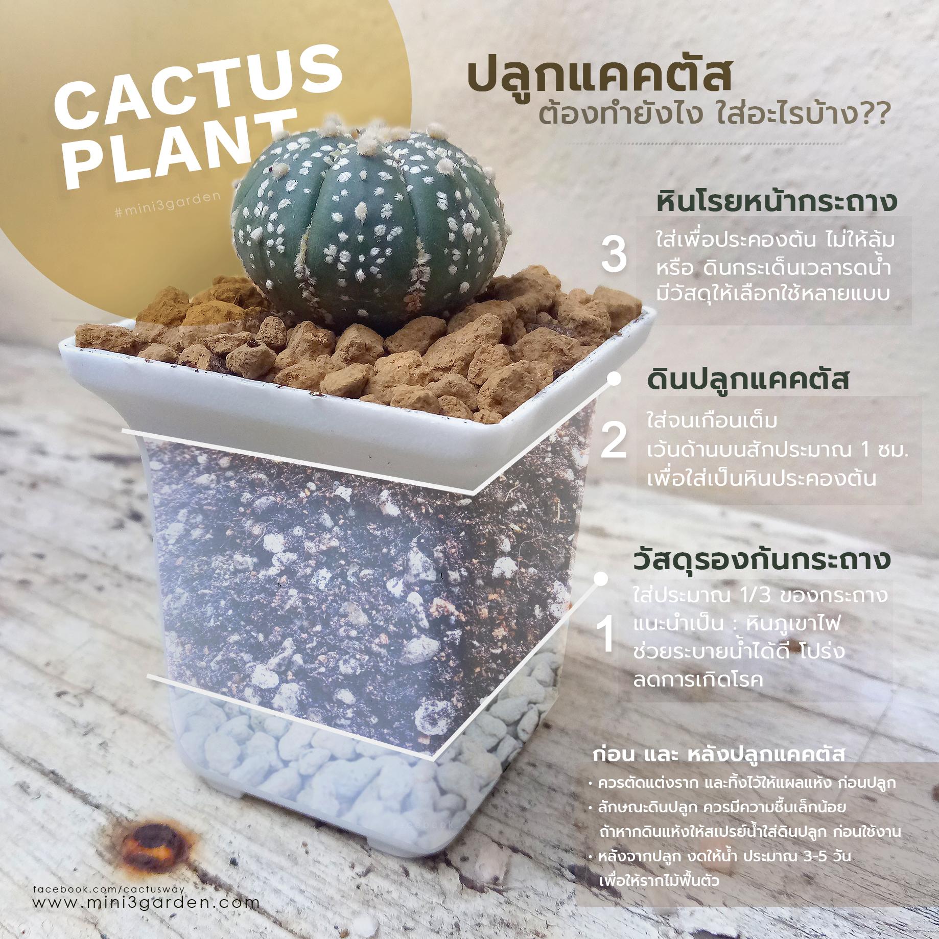 cactus_plant.jpg