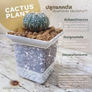cactus_plant