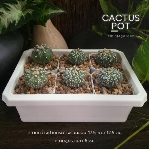 cactus_pot-6-2