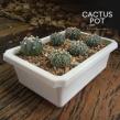 cactus_pot-6