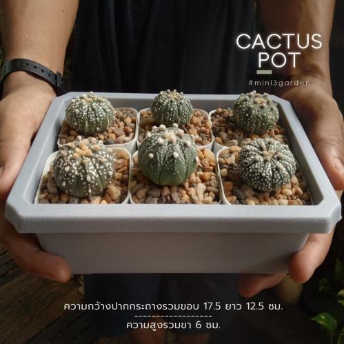 cactus_pot-7