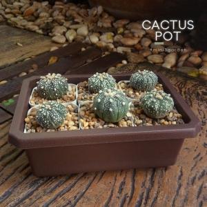 cactus_pot-8-2