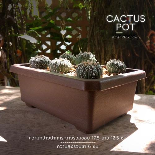 cactus_pot-8