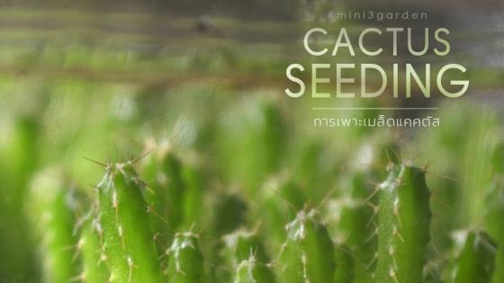 cactus_seeding1-e1567516274744.jpg