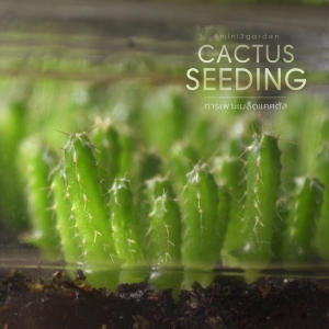 cactus_seeding