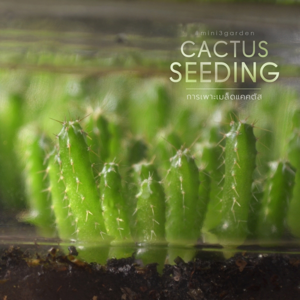 cactus_seeding.jpg