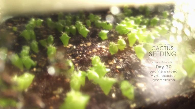 cactus_seeding5.jpg