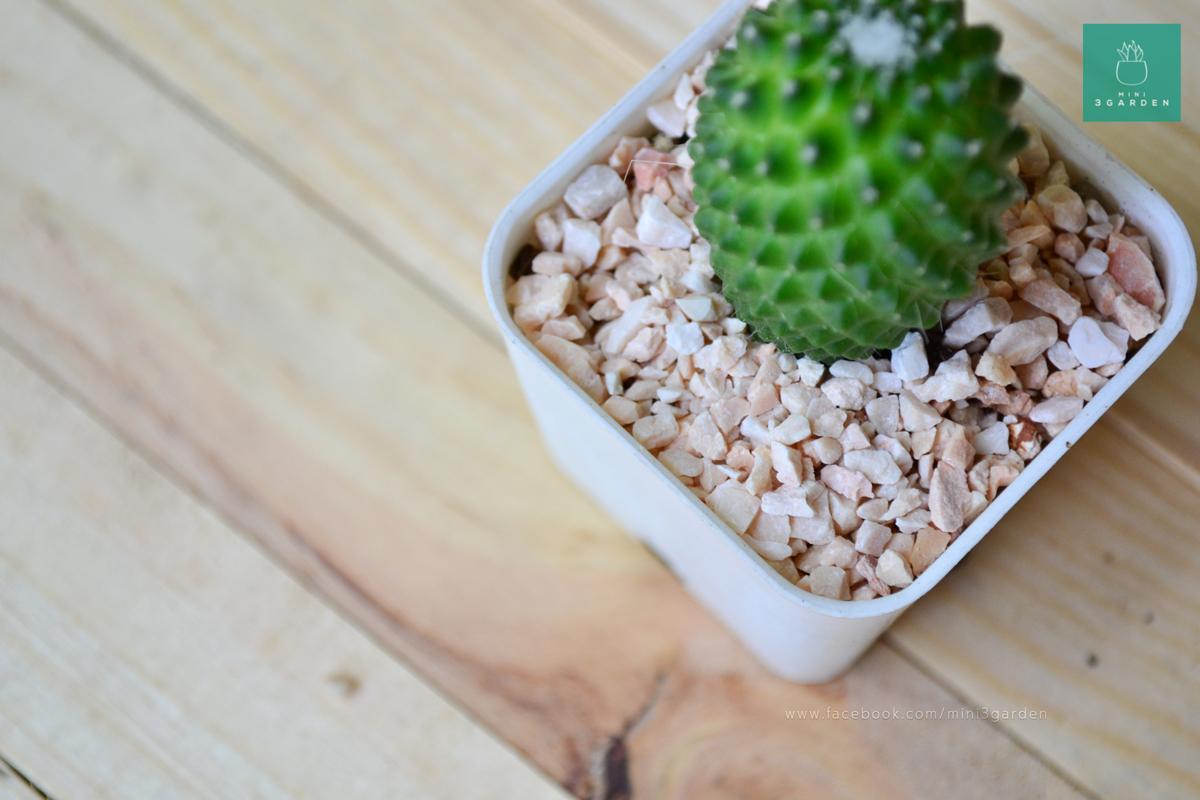cactus-succulent-stone-510788746
