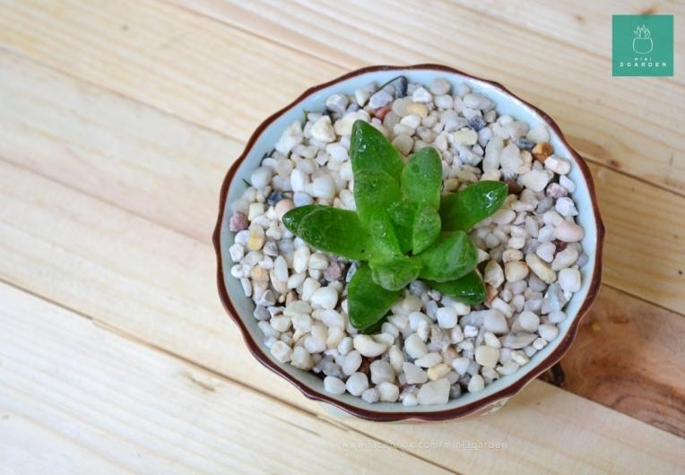 cactus-succulent-stone-541
