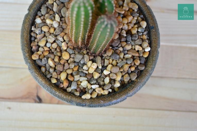 cactus-succulent-stone-7145456
