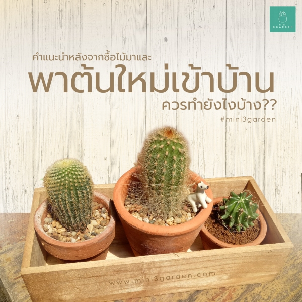 cactus_come_home-Recovered