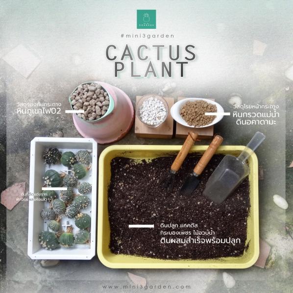 cactus_plant_step