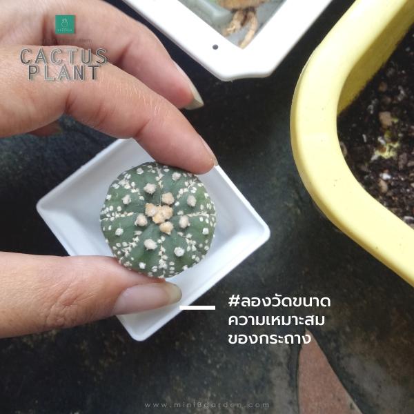 cactus_plant_step2