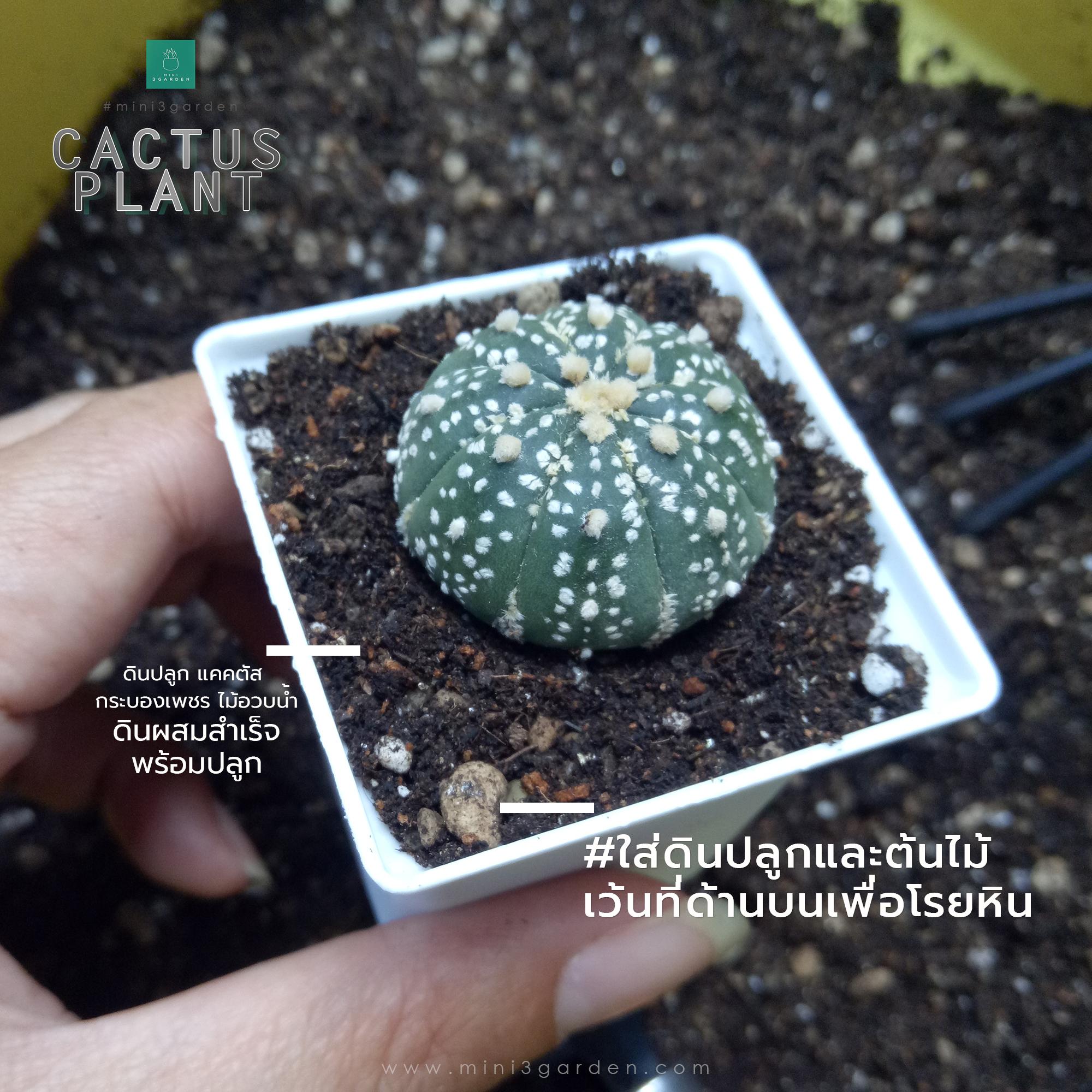 cactus_plant_step4