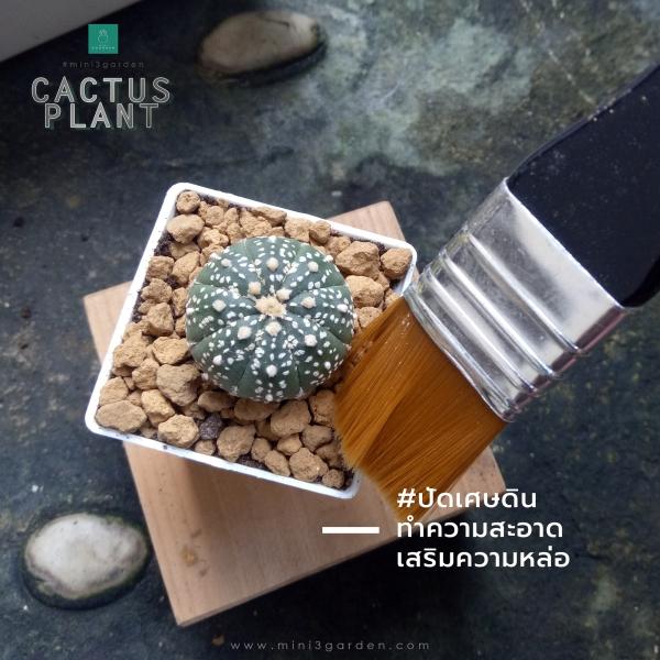 cactus_plant_step6