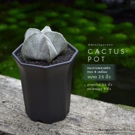 plastic_pot_กระถาง 8 เหลี่ยม