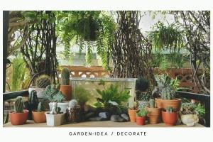 cactus_succulent_harowthia2