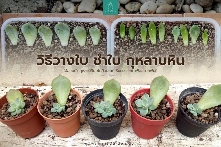 paste_leaf