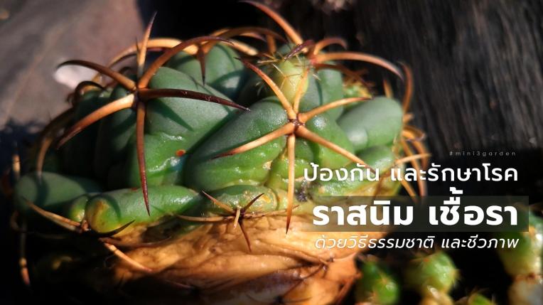 cactus_care