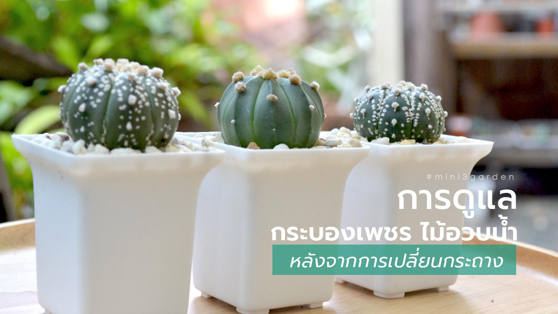 cactus_care.jpg