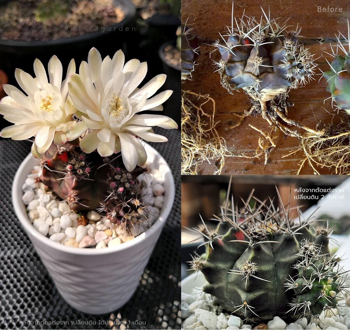 cactus_care020202-1.jpg