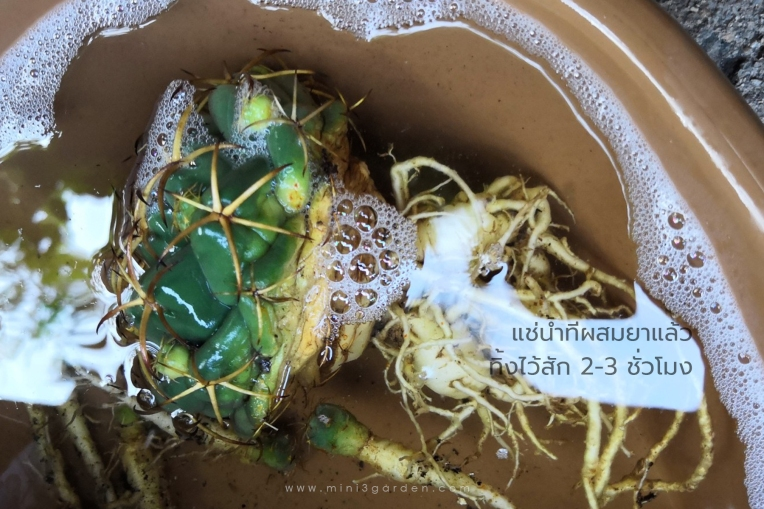 cactus_care333.jpg