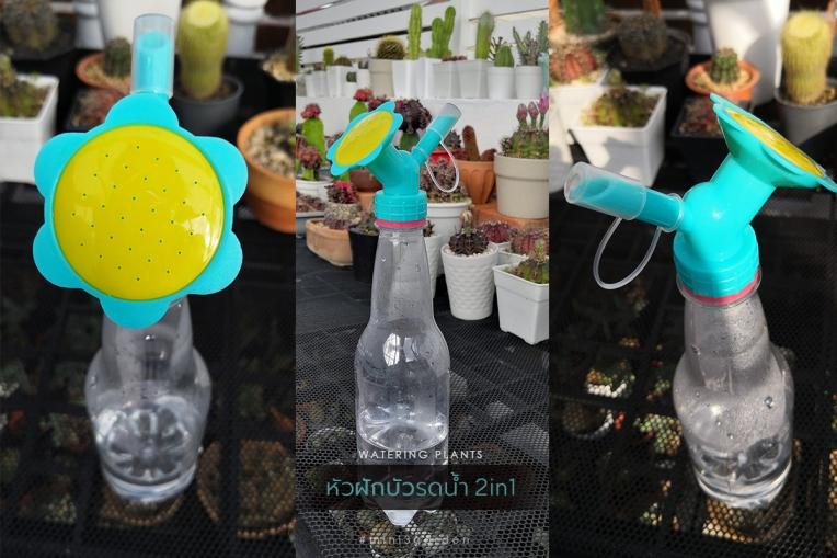 plant_accessories_2.jpg