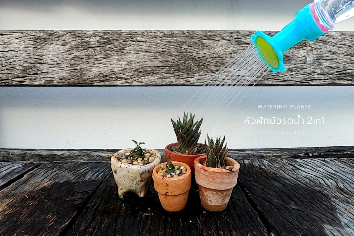 plant_accessories_3