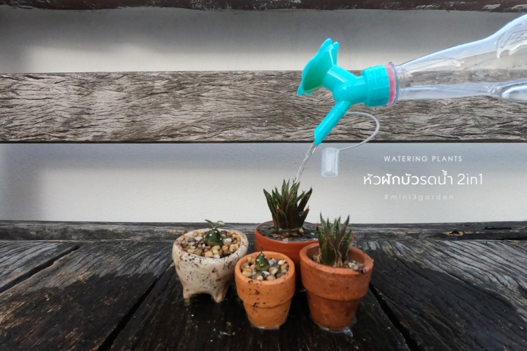 plant_accessories_4