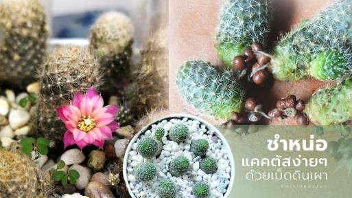 spilt_cactus