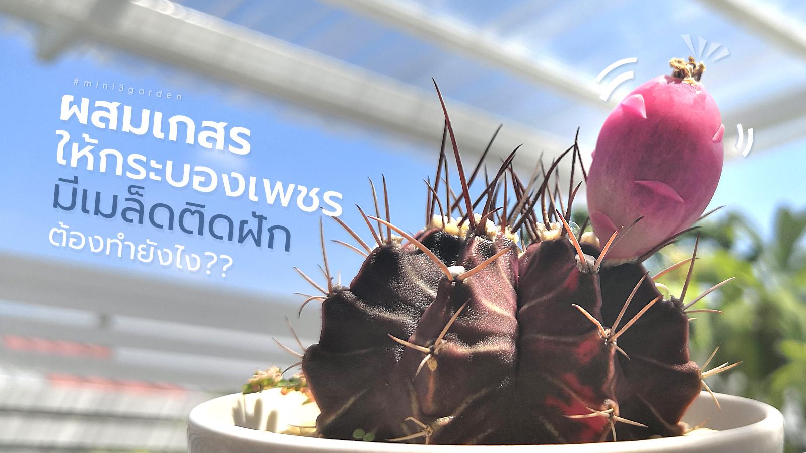 How_to_cactus_breeding