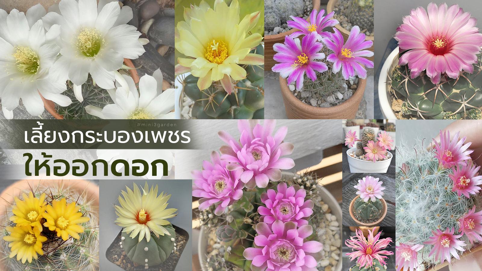 cactus_flower.jpg
