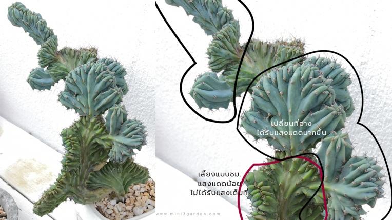 light_n_cactus2.jpg