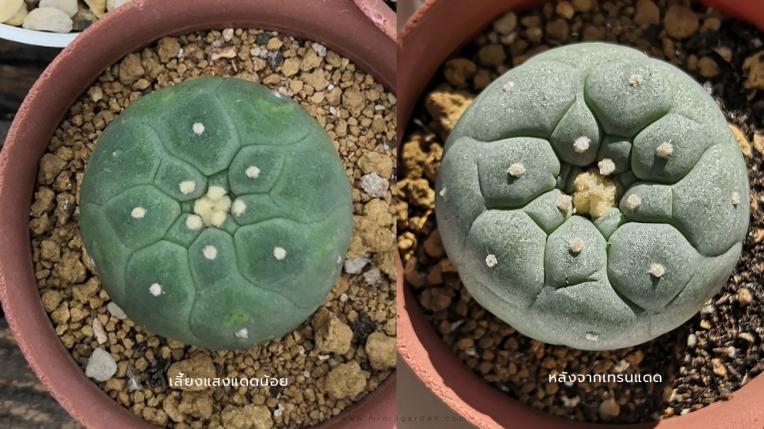 light_n_cactus3.jpg