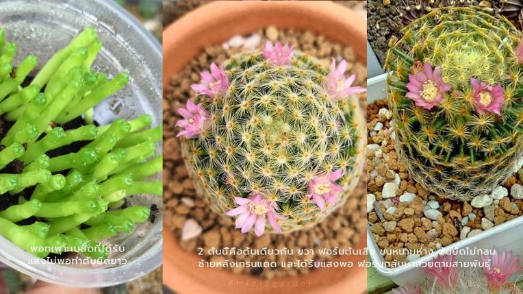 light_n_cactus4.jpg