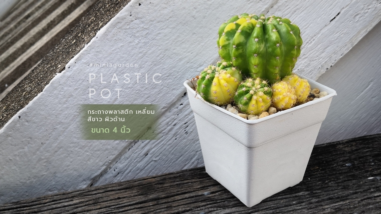 square_plastic_pot_4inc.jpg