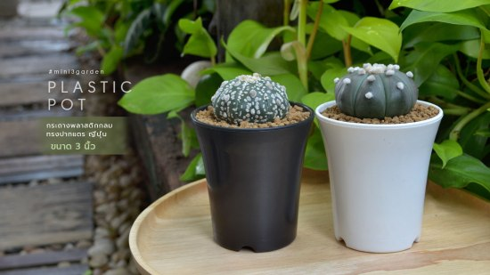 cactus-plastic-pot-japan-style-3inc.jpg