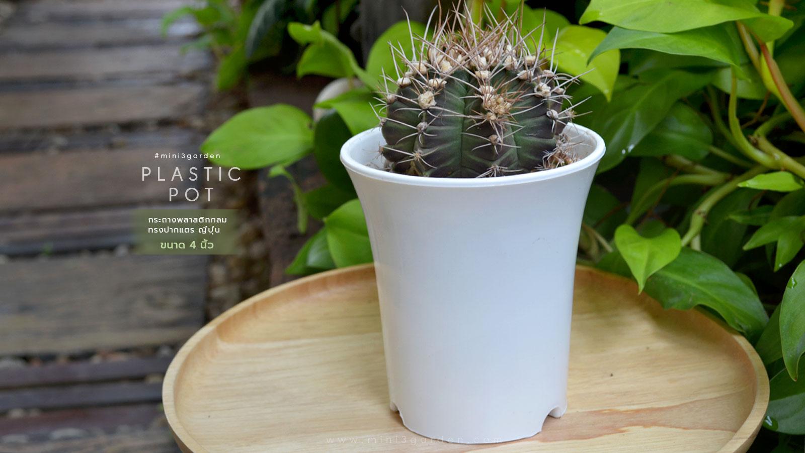 cactus-plastic-pot-japan-style-4inc-2