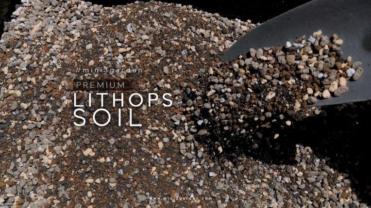 lithop_soil22.jpg